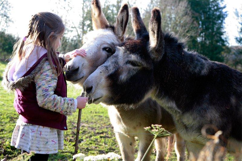 Apples equestrian, Leigh Sinton, Malvern donkeys