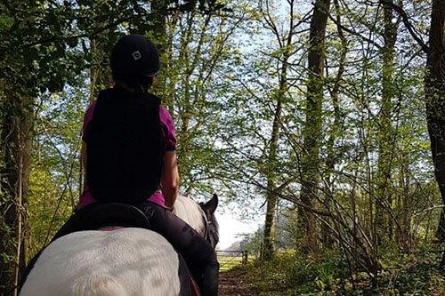 Apples equestrian, Leigh Sinton, Malvern Home visit horse