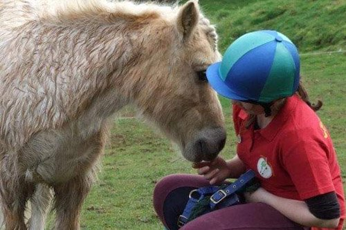 Apples equestrian, Leigh Sinton, Malvern horse care